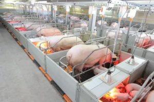 Самое прибыльное животноводство