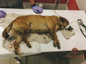 Собаку сбила машина задние лапы отказали что делать чтобы вылечить