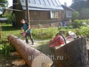 Можно ли вырубить дерево на собственном участке