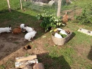 Можно ли разводить домашних животных на даче