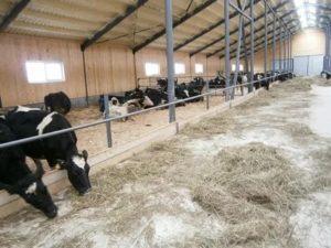 Как построить бизнес на посредничестве покупки скота